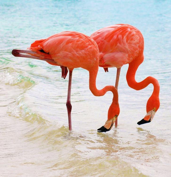flamingo-5.thumb.jpg.31d85330b691d1f457ff1535499e6f9e.jpg