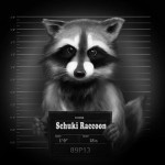 Schuki_Raccoon