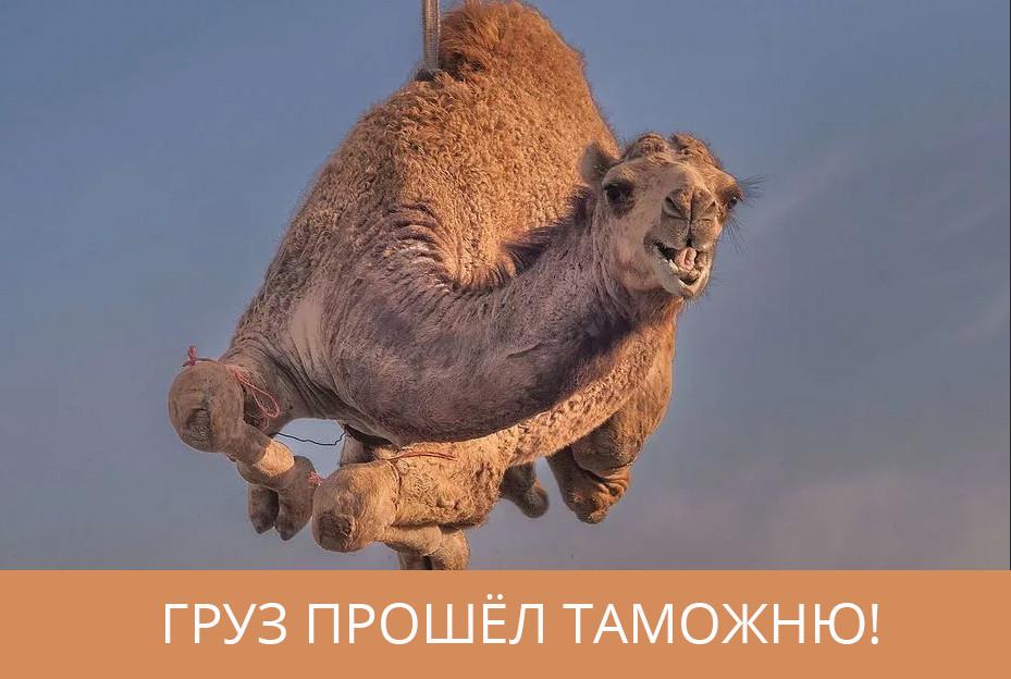 custom_camel.jpg.0ccd0695cb03dbc268e80e72e9269f0d.jpg